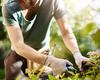 Nouveau régime fiscal pour les «petits boulots» et travail associatif
