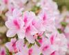 La fine fleur internationale décorera l'Hôtel de Ville de Bruxelles du 14 au 18 août