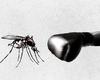 La lutte contre le paludisme au point mort, selon l'OMS