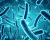 Une start-up a trouvé comment mieux combattre les bactéries en milieu hospitalier
