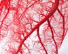 Gentse prof krijgt prijs voor onderzoek naar cardiovasculaire aandoeningen