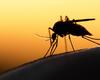 Hoop op nieuw middel tegen malaria