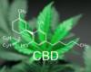 Le CD&V pour l'usage médicinal du cannabis en cas d'épilepsie ou SLA