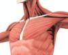 Fractures de la clavicule: l'incidence et le recours au traitement opératoire en augmentation en Belgique
