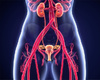 Première en Belgique: l'urètre d'une femme reconstitué avec une greffe de muqueuse buccale