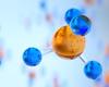Des chercheurs de l'UCLouvain font une découverte prometteuse contre le cancer