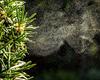 Meetnet van pollen-concentraties: nuttig voor arts en allergielijder