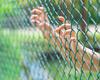 Bvas bezorgd over vluchtelingenkinderen op Australisch eiland