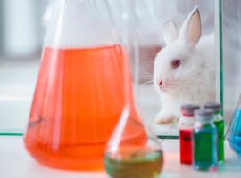 Vlaamse universiteiten kiezen voor transparantie over dierproeven