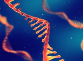 PRIME-cellen geactiveerd voorafgaand aan opflakkering reumatoïde artritis