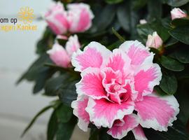 Jubileumeditie plantjesweekend van Kom op tegen Kanker van start
