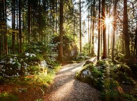 Onderzoekers KU Leuven ontwerpen eenvoudige sensormodule om gezondheid bomen te meten