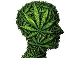 Cannabis: pas de preuve d'efficacité contre les troubles mentaux (étude)