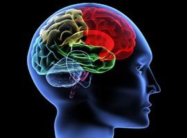 Des étudiants développent une application pour prévenir l'épilepsie chez les enfants