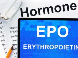 Érythrocytose familiale et mutation EPO