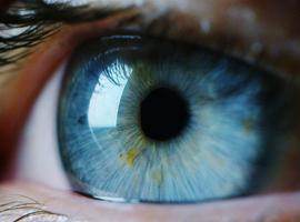 Eerste tests in UZ Leuven met kunstmatig netvliesapparaat zijn positief