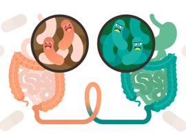 Transplantation fécale: un nouveau traitement du diabète, qu'il soit de type 1 ou 2?