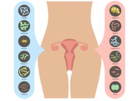 Gynécologie: le microbiote en fragile équilibre