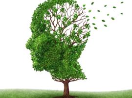 Des chercheurs de la VIB-KUL explorent une nouvelle piste contre la maladie d'Alzheimer