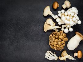 La consommation de certains champignons protégerait de maladies neurodégénératives telles que la maladie d'Alzheimer
