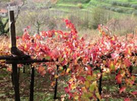 La plus vieille vigne du monde!