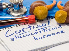 Un bref aperçu de la biologie des glucocorticoïdes