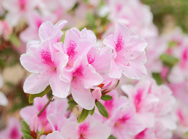 Start Plantjesweekend Kom op tegen Kanker