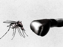 Il faut plus d'argent pour lutter contre la malaria, dit l'OMS