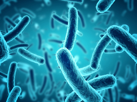Superbactéries: l'OMS s'alarme du manque de nouveaux antibiotiques