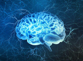 Des mini-cerveaux créés en laboratoire s'activent, une première