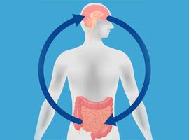 800.000 euro voor onderzoek naar zenuwstelsel in onze darmen