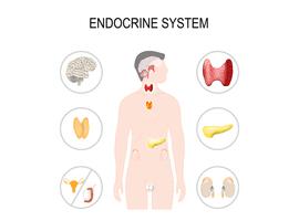 Covid-19: aspects endocriniens et perspectives thérapeutiques