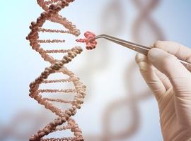 VUB-wetenschappers werken mee aan prestigieus onderzoek naar DNA-wijziging