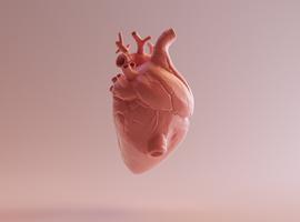 La Ligue cardiologique belge lance la Semaine du coeur sans sucre ajouté