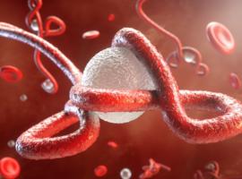 La RDC va finalement utiliser le vaccin belge contre le virus Ebola