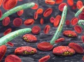 Smartphone en genetica ter verbetering van malariapreventie