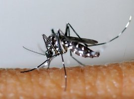 Virus du Nil occidental: trois morts dans le nord-est de l'Italie