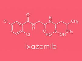 L'ixazomib en maintenance après transplantation autologue de cellules souches dans le myélome multiple