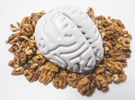 L'influence des phytostérolssur le cerveau