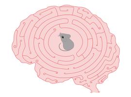 PINK1, nouvelle voie thérapeutique dans la démence d'Alzheimer?
