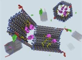 Un nanorobot à ADN injectable nécrose une tumeur en 48 heures