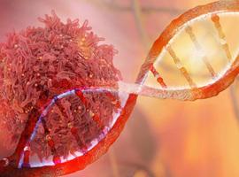Ibrutinib + vénétoclax en cas de lymphome à cellules du manteau