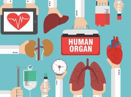 Aantal transplantaties, wachtlijsten en  wachttijden in België