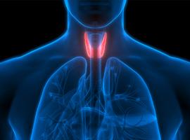 Modifications du métabolisme des hormones thyroïdiennes au cours d'une maladie grave