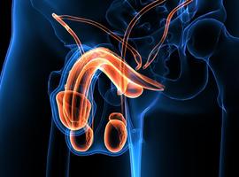 Faut-il évaluer la fonction testiculaire après infection par le Covid-19?