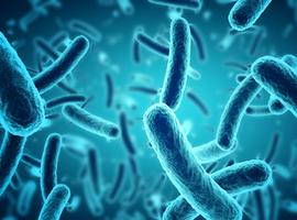 Environnement microbien et cancer de la prostate
