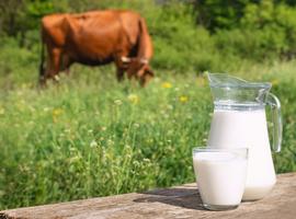 Comment diagnostiquer une allergie aux protéines de lait de vache de type retardé?