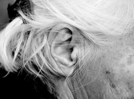 Cochleair implantaat behoedt ouderen voor dementie (UZA, UA)