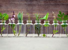 Hypertensie: wat als planten de therapietrouw zouden verbeteren?