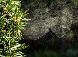 Le réseau de surveillance des taux de pollen: un outil pour le médecin et le patient allergique